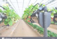 Amazing Chiangmai, Thailand – February 12 : Smart Agriculture Technology throughout Vertical Farming Technology