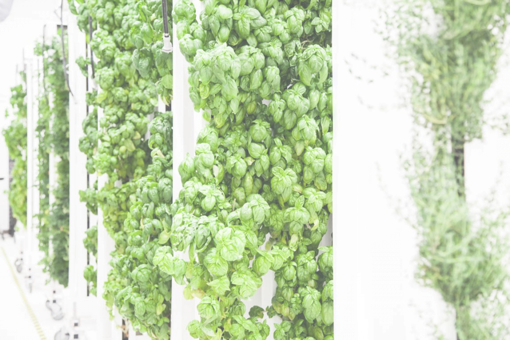 Beautiful 9 Reasons Why Vertical Farms Fail – Bright Agrotech – Medium pertaining to Vertical Farming Technology