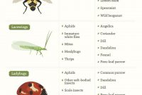 Cool 112 Best Insects In Garden Images On Pinterest | Garden Insects regarding Best of Common Garden Pests