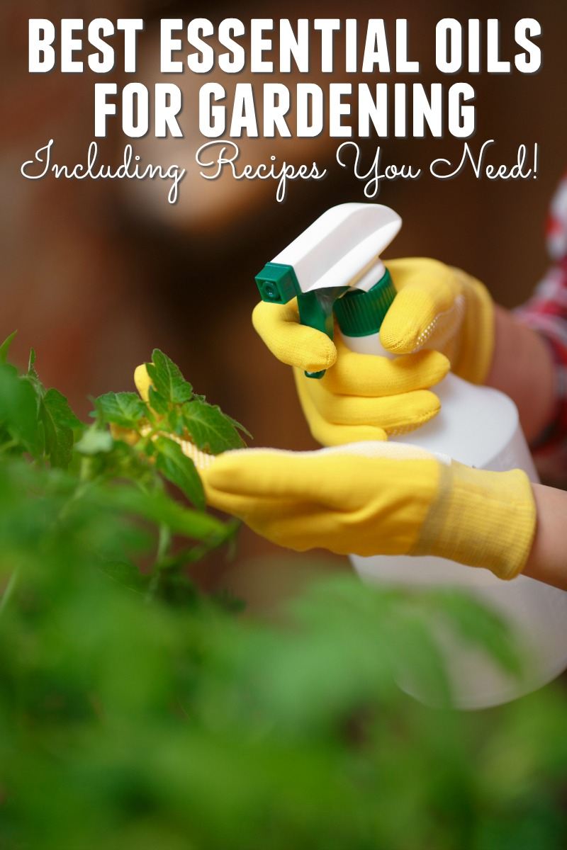 Cool Best Essential Oils For Gardening Plus Recipes - Happy Mothering with regard to Essential Oils For Garden Pests