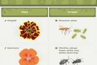 Cool Common Garden Pests And How To Manage Them [Infographic] | Homesteading inside Best of Common Garden Pests