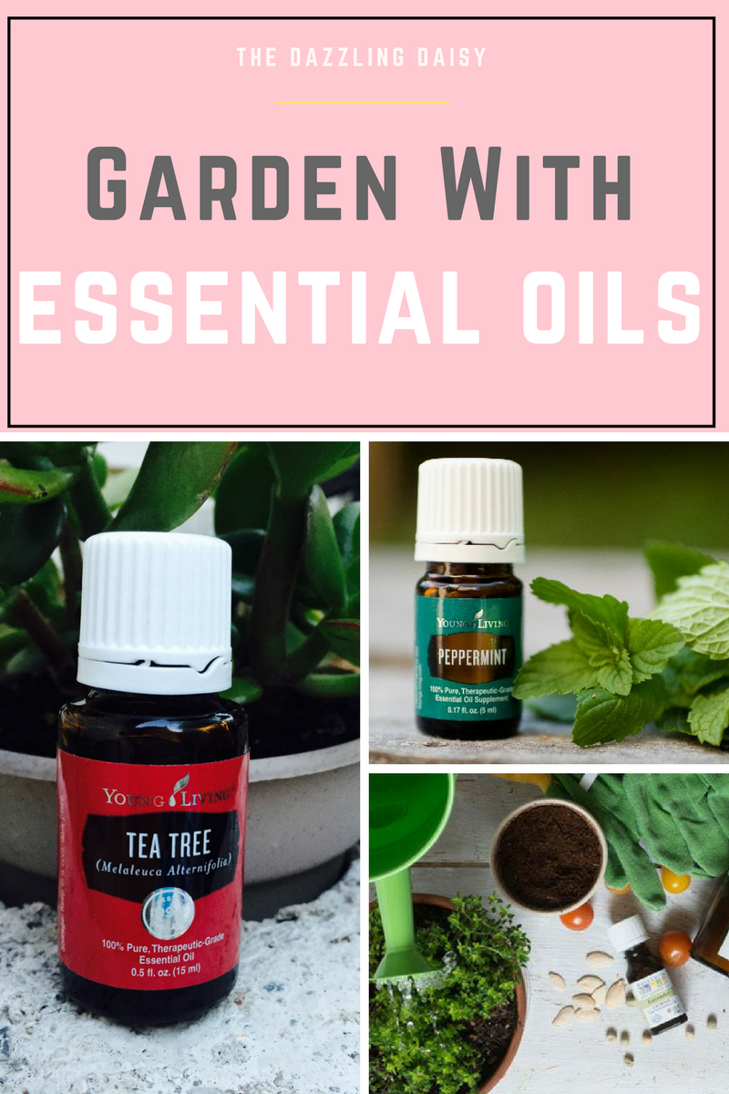 Cool Garden With Essential Oils | Peppermint Oil, Gardens And Garden Ideas intended for Essential Oils For Garden Pests