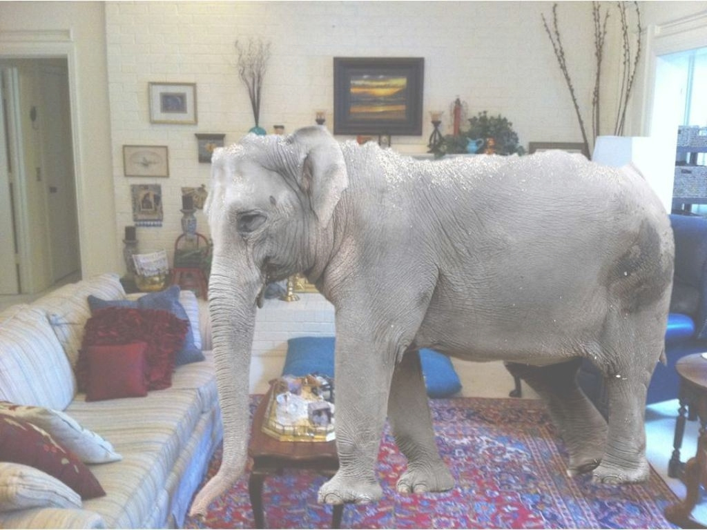 Cool The Elephant In The Living Room Meaning - Home Ideas 2018 within Luxury The Elephant In The Living Room