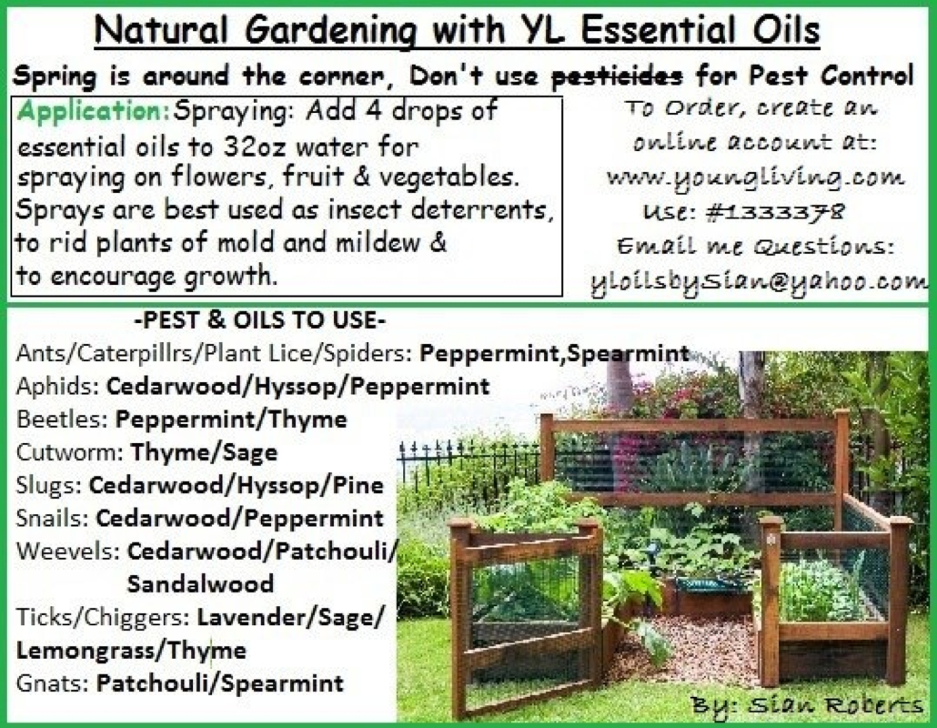 Cool Useful Information For Your Health Using Young Living Essential Oils pertaining to Luxury Essential Oils For Garden Pests