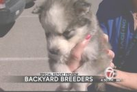 Elite Special Report Preview: Backyard Breeder Crackdown – Kvia for Backyard Breeder