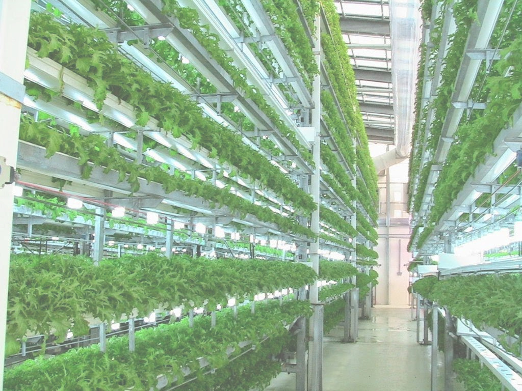 Elite Vertical Farming : The Future Of Agriculture | Newsgram in Inspirational Vertical Farming Technology