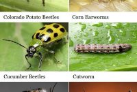 Epic 100+ Best Garden–Bugsgood And Bad Images On Pinterest with Common Garden Pests