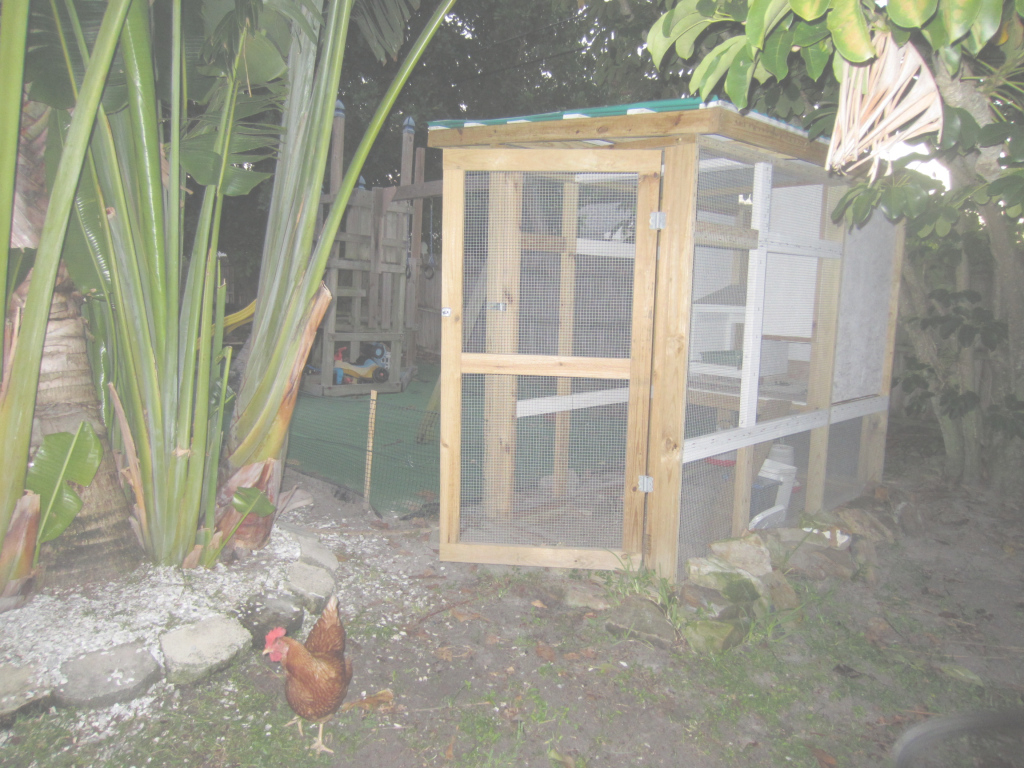 Epic Backyard Chickens | Modern Pioneer Mom pertaining to Backyard Chicken Farming