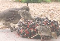 Epic Backyard Quail And Babies – Youtube with regard to Review Backyard Quail