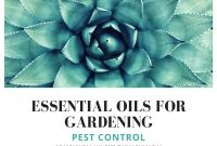 Epic Essential Oils For Gardening: Pest Control – Amanda Gerber throughout Essential Oils For Garden Pests