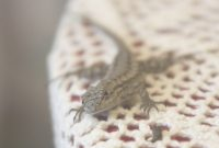 Epic What Do Baby Lizards Eat? | Reference within What Do Backyard Lizards Eat