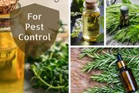 Fabulous 15 Essential Oils For Gardening For Pest Control You Will Have To within Luxury Essential Oils For Garden Pests