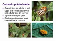 Fabulous Common Garden Insect Pests – Youtube in Common Garden Pests