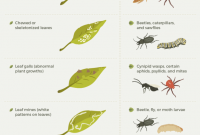 Fabulous Everything You Need To Know About Getting Rid Of Common Garden Pests intended for Set Vegetable Garden Pests Identification