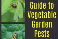 Fabulous Guide To Vegetable Garden Pests: Identification And Organic Controls inside Vegetable Garden Pests Identification