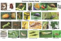 Fabulous Index Of /wp-Content/uploads/2018/05 with regard to Best of Common Garden Pests