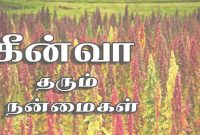 Fabulous Quinoa | Quinoa In Tamil | Quinoa Benefits In Tamil – Youtube regarding Best of Landscape Meaning In Tamil