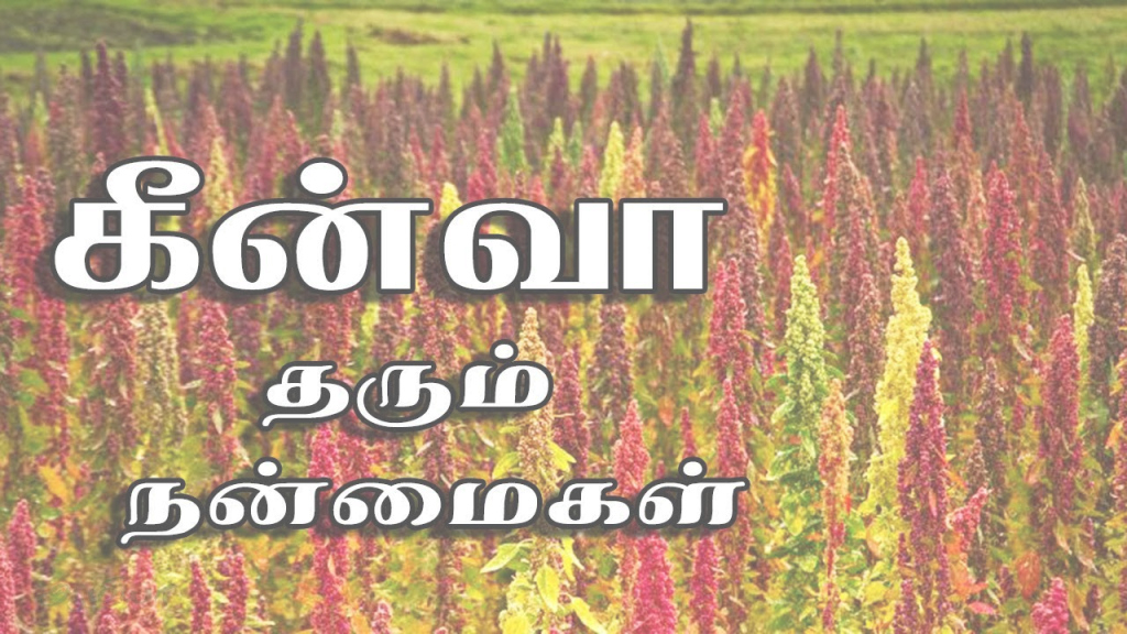 Fabulous Quinoa | Quinoa In Tamil | Quinoa Benefits In Tamil - Youtube regarding Best of Landscape Meaning In Tamil