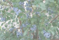 Fabulous Unsurpassed Backyard Berry Plants Specializing In Organically Grown throughout Set Backyard Berry Plants