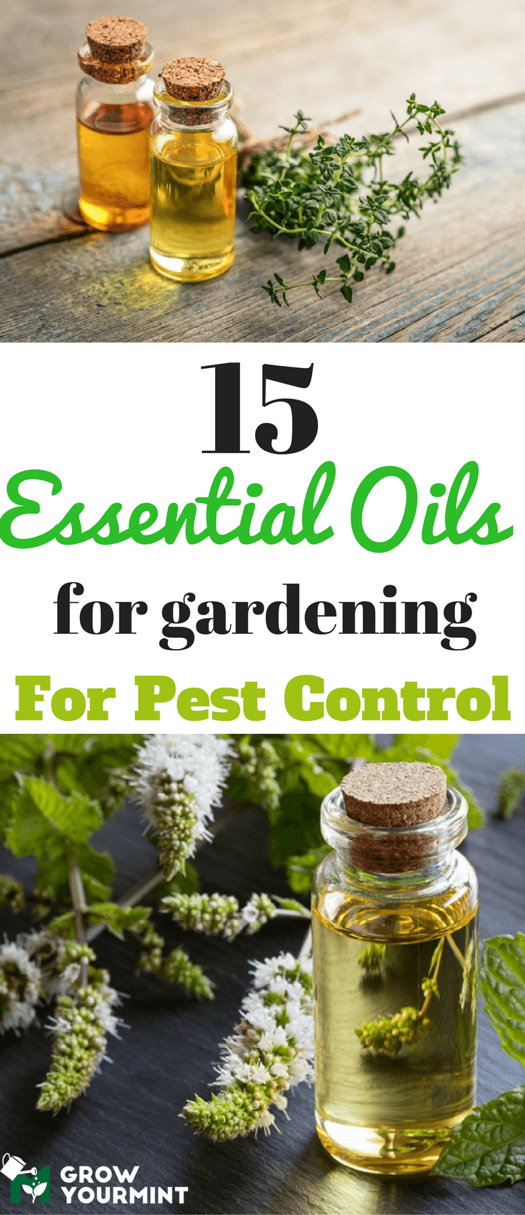 Fancy 15 Essential Oils For Gardening For Pest Control You Will Have To intended for Essential Oils For Garden Pests