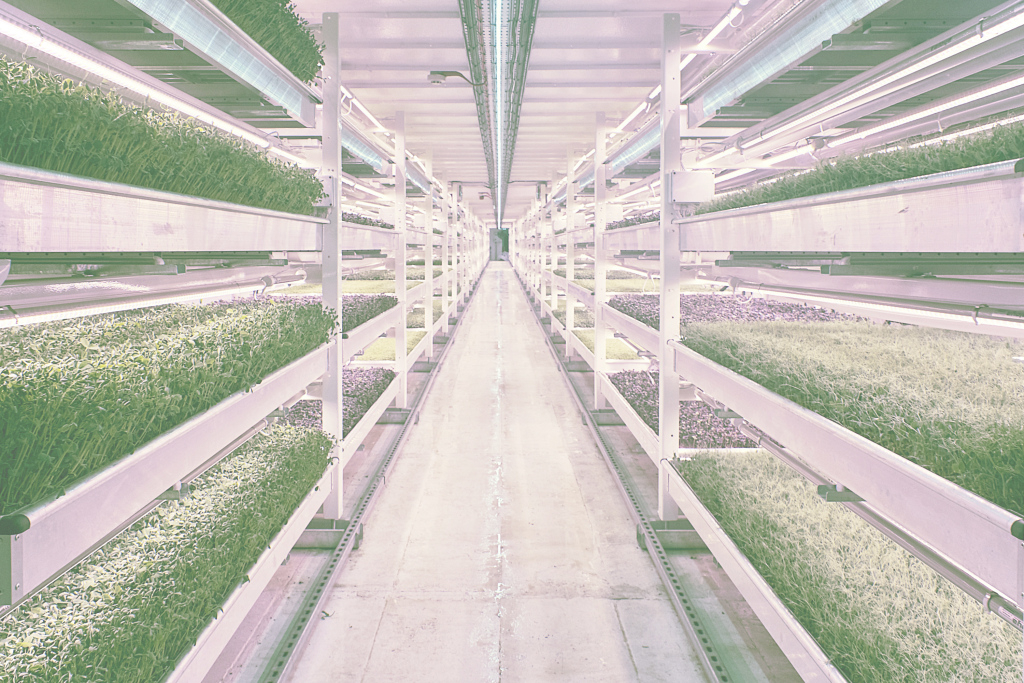 Fancy Association For Vertical Farming To Reveal Sustainability within Vertical Farming Technology