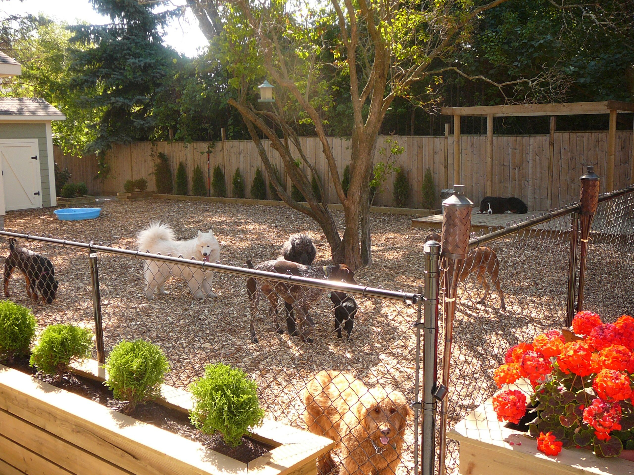 Fancy Dog Daycare Backyard Park | Pets | Pinterest | Dog Friendly Backyard inside High Quality Dog Friendly Backyard