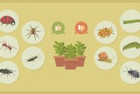 Fancy How To Get Rid Of Common Garden Pests | Fix for Best of Common Garden Pests