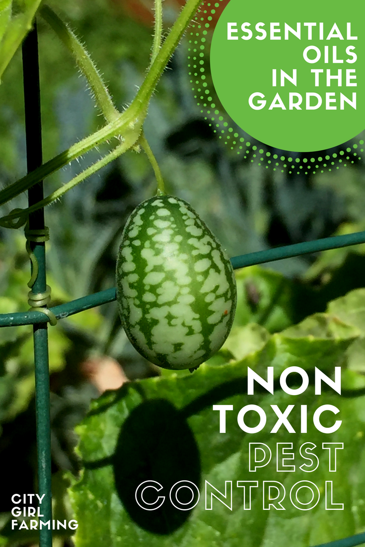 Fancy In The Garden: Non-Toxic Pest Control With Essential Oils - City throughout Luxury Essential Oils For Garden Pests