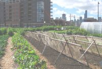 Fancy Urban Agriculture – Wikipedia throughout What Is Urban Gardening