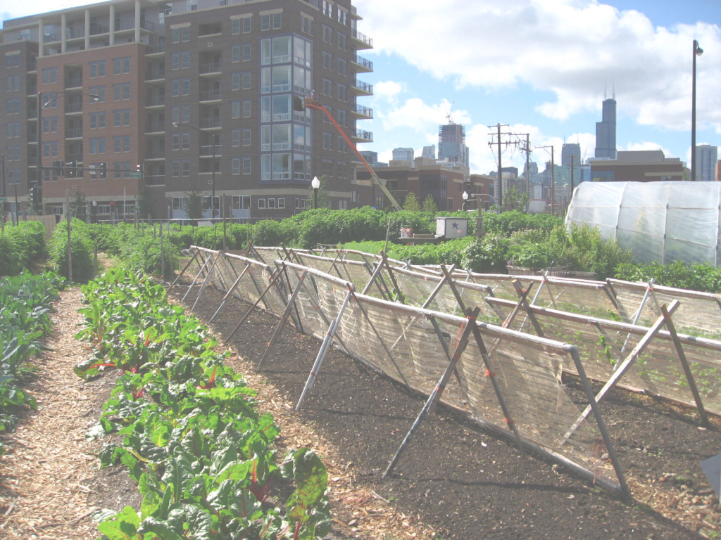 Fancy Urban Agriculture - Wikipedia throughout What Is Urban Gardening