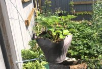 Glamorous Grow More Food Vertically 5 Ez Ways With Added Benefits In The inside New Benefits Of Urban Gardening