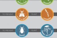 Glamorous How To Prevent Common Garden Pests-Pest Infographic – Improvements Blog with Common Garden Pests