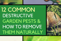 Glamorous Organic Garden Pest Control: Remove These 12 Destructive Pests inside Best of Common Garden Pests