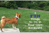 Inspirational 5 Fun Things To Do In Your Own Backyard – The Good Mama intended for Best of Fun Things To Do In Your Backyard