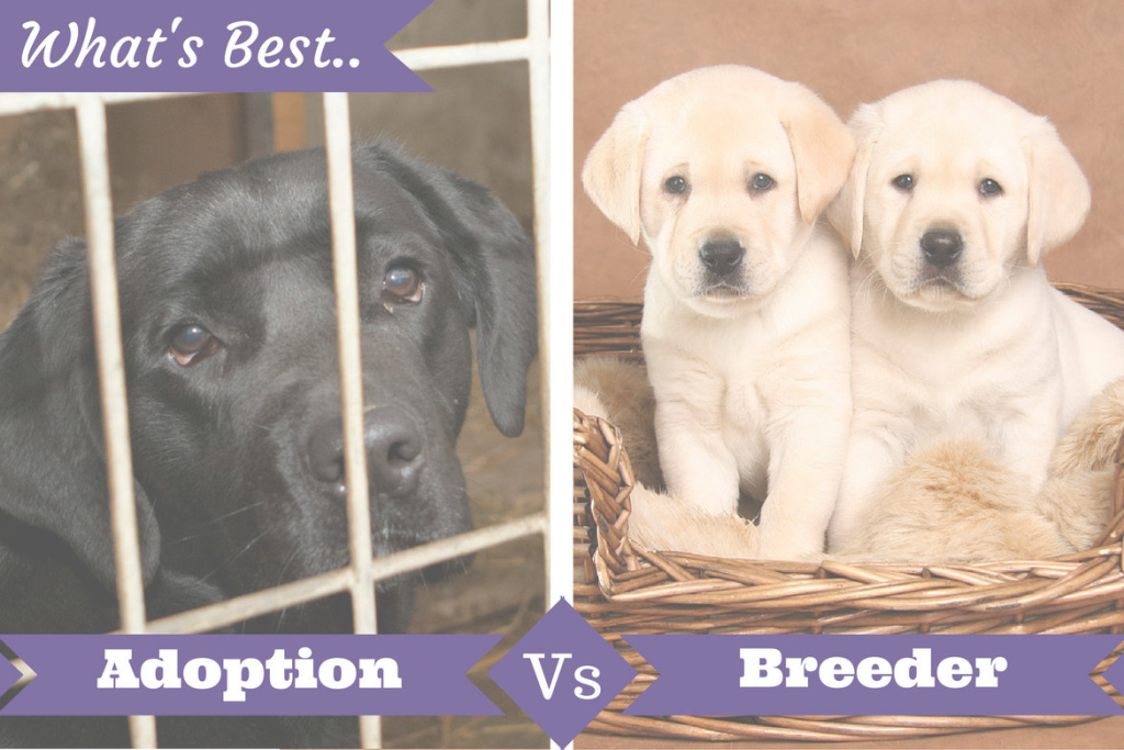 Inspirational Adoption From Shelter Vs. Buying From A Breeder: What's Best For You? inside Lovely Backyard Breeder