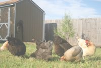 Inspirational Backyard Chickens | Peregrin Farms with Backyard Chicken Farming