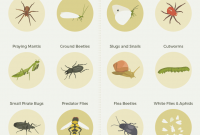 Inspirational Common Garden Pests And How To Manage Them [Infographic] | Homesteading regarding Best of Common Garden Pests