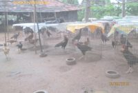 Inspirational Godavari Backyard Poultry Farm with regard to Backyard Chicken Farming