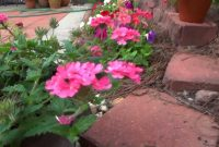 Inspirational My Backyard Flowers – Summer 2012 – Youtube with Backyard Flowers