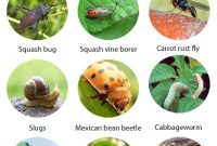 Lovely Best Sure-Shot Organic Pest Control Approaches Every Gardener Should intended for Best of Common Garden Pests