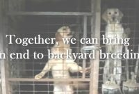 Lovely Help To End Puppy Farms/backyard Breeding – Youtube pertaining to Backyard Breeder