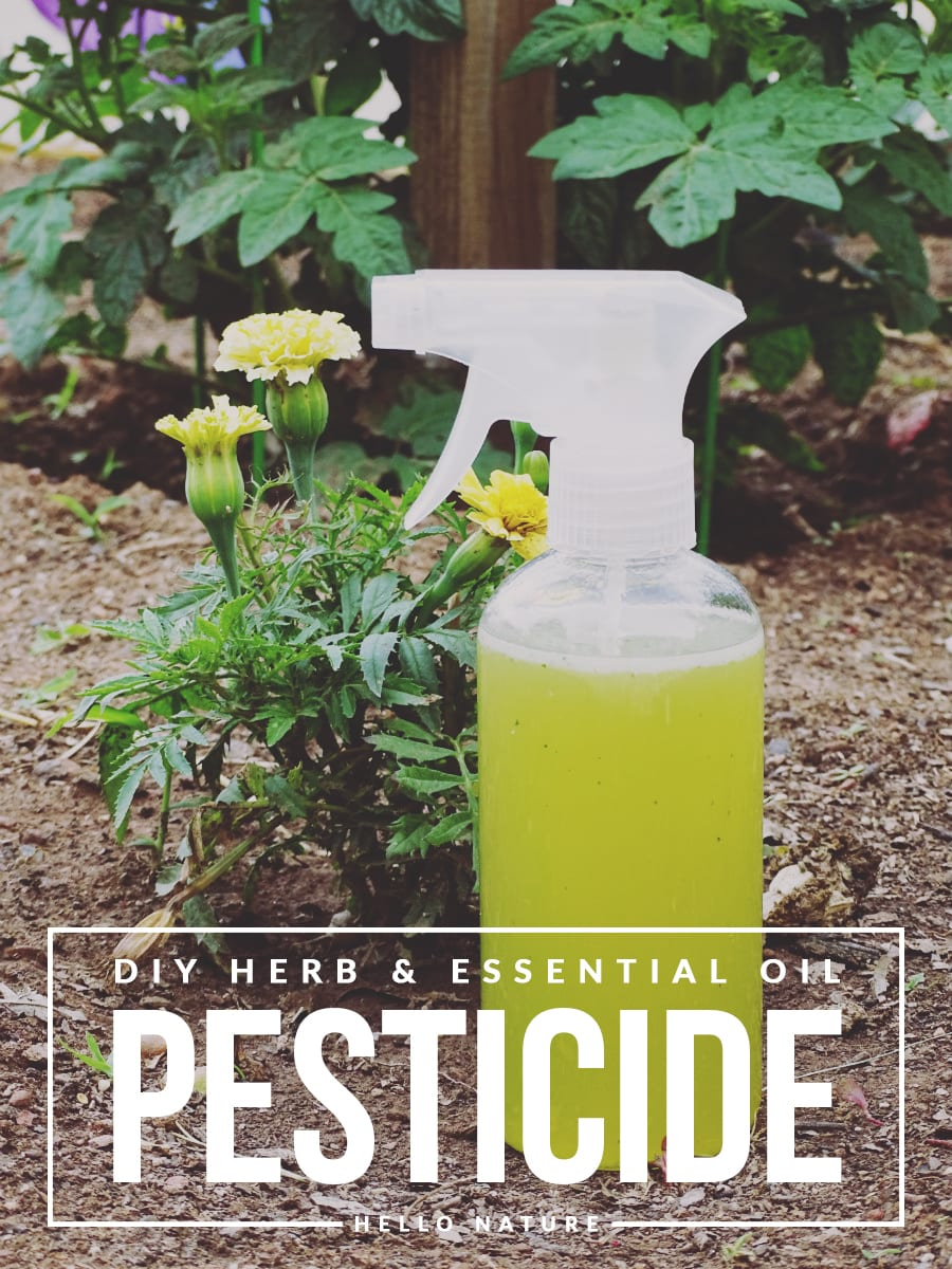 Lovely Herb And Essential Oil Pesticide Diy - Hello Nature with regard to Essential Oils For Garden Pests