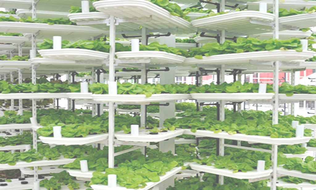 Lovely Vertical Farming: Singapore's Solution To Feed The Local City in Vertical Farming Technology