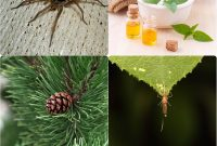Modern 7 Essential Oils To Battle Bugs, Insects And Pests – Home And with regard to Luxury Essential Oils For Garden Pests