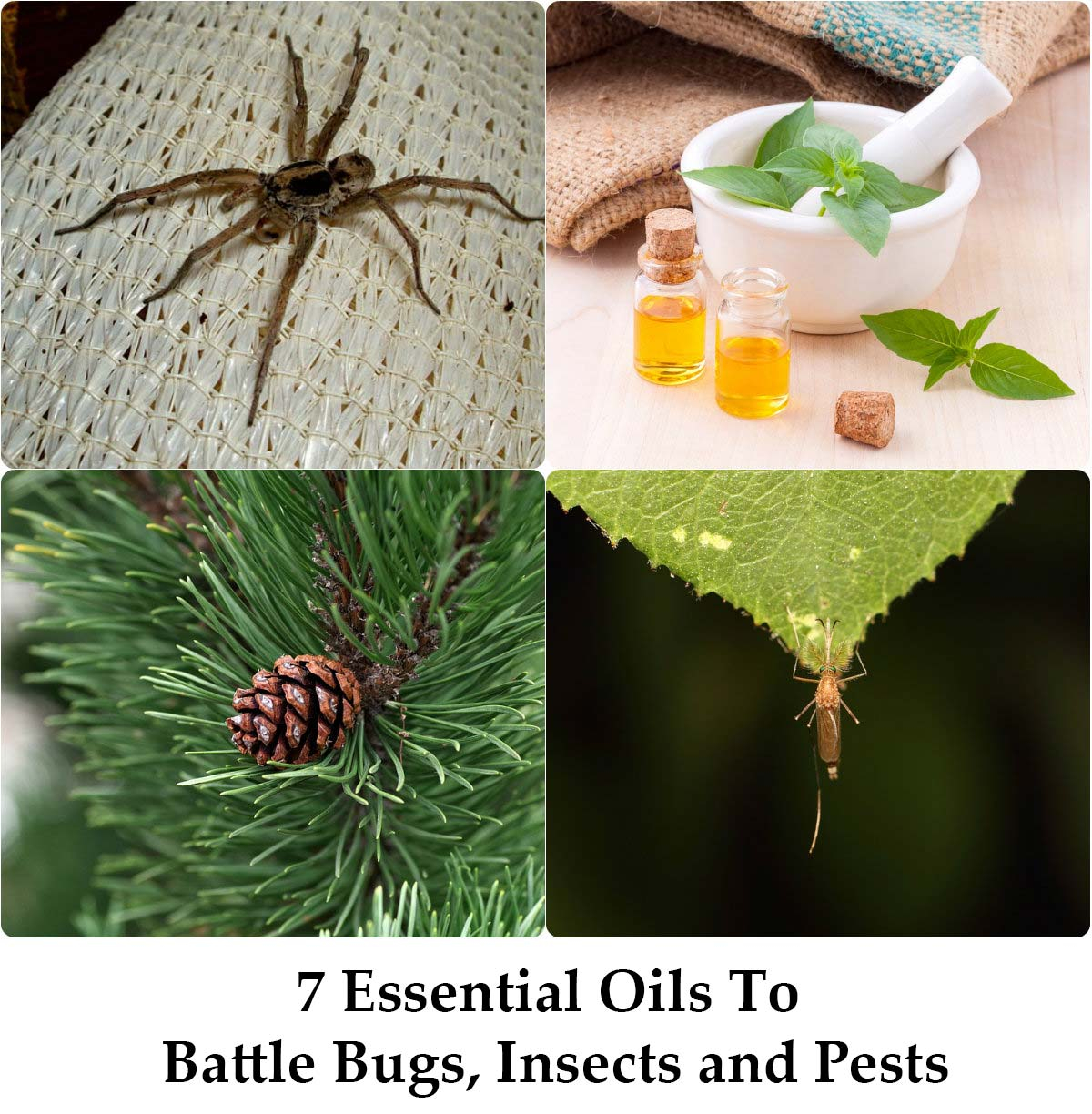 Modern 7 Essential Oils To Battle Bugs, Insects And Pests - Home And with regard to Luxury Essential Oils For Garden Pests