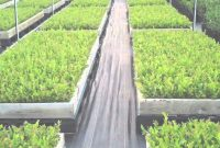 Modern Certified Blueberry Plants – Dimeo Blueberry Farm Nursery – Youtube intended for Set Backyard Berry Plants