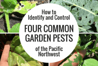 Modern How To Identify And Control Four Common Garden Pests Of The Pacific pertaining to Best of Common Garden Pests