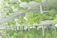 Modern Vertical Farming: A Hot New Area For Investors—Commentary intended for Vertical Farming Technology