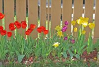 Modular Karl Kelman | Backyard Flowers | Highlands Ranch for Good quality Backyard Flowers