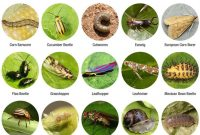 Modular The Top 7 Garden Pests: What Worked And Didn't Some Good Information in Best of Common Garden Pests